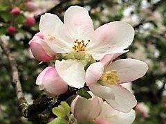 Relaxologie de pleine conscience et Magnétisme EBEME : grand nettoyage de printemps