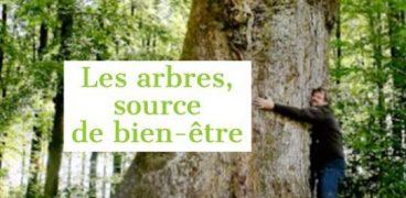 Les arbres sources de bien-être_Mylène Guillot-EBEME