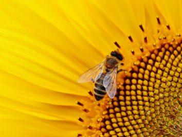 Piqûres d'insectes_Mylène GUILLOT_Magnétiseuse Rebouteuse Relaxologue