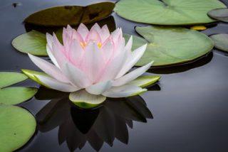 Relaxologie de pleine conscience et Magnétisme EBEME : séance bien-être